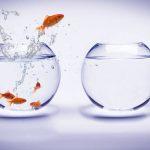 coaching_fish2